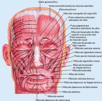 Músculos Expressivos da Face - Sorriso