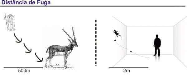 distância-entre-animais