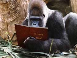 gorila-lendo