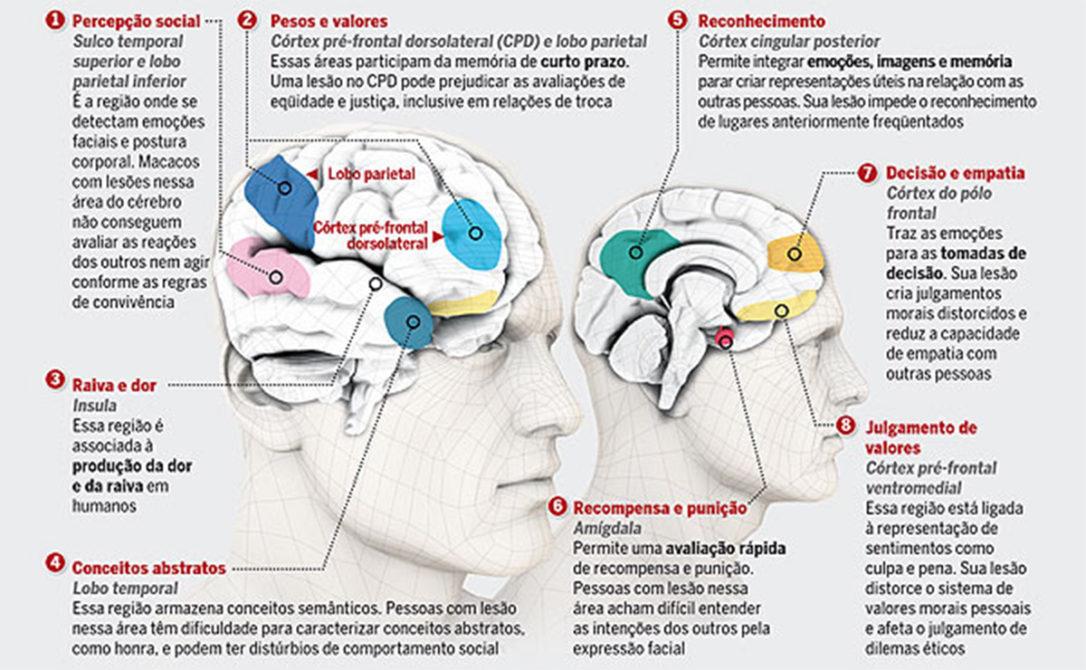 areas-moralidade-linguagem-corporal-pnl-ibralc